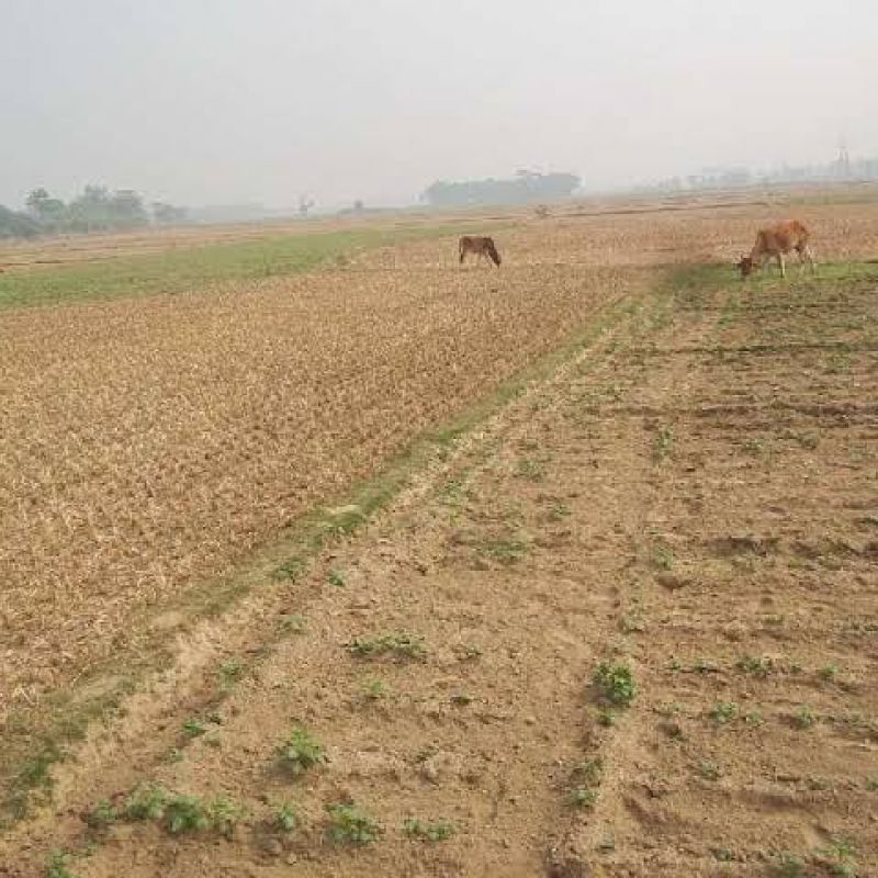 Agricultural land for sale in kashipur , rura , Kanpur / 7000 sq.ft, 7 bigha kacche